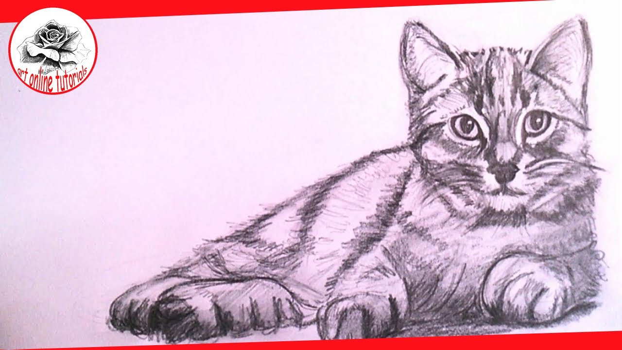how to draw a realistic cat with pencil step by step drawing the