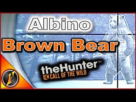 Albino & Melanistic Brown Bear | theHunter: Call of the Wild 2018