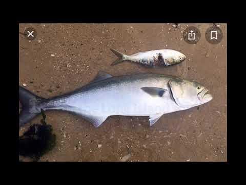 Fishing At Cedar Beach NY