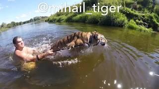 ТИГР vs ЖАРА☀️🐅 TIGER VS HEAT. ☀️Купание тигра.
