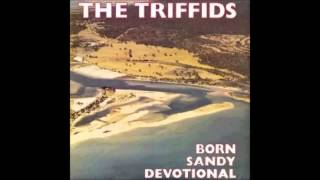 THE TRIFFIDS  CONVENT WALLS