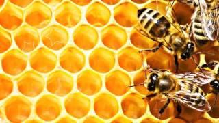 видео Акациевый мед: лечебные и полезные свойства