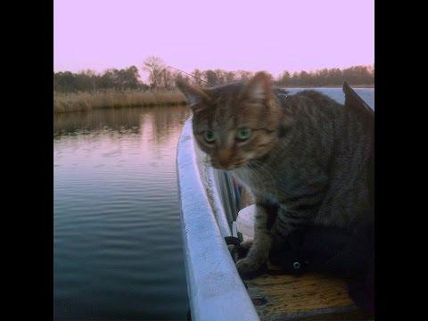 Kater und 2 Hunde machen eine Bootsfahrt ;)