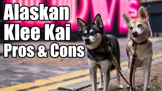 Alaskan Klee Kai Pros and Cons