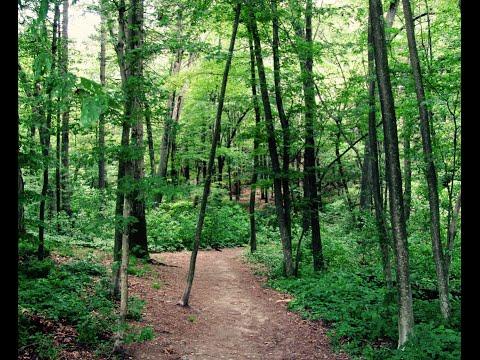 Trail Running at Wilson Mountain in Dedham, MA
