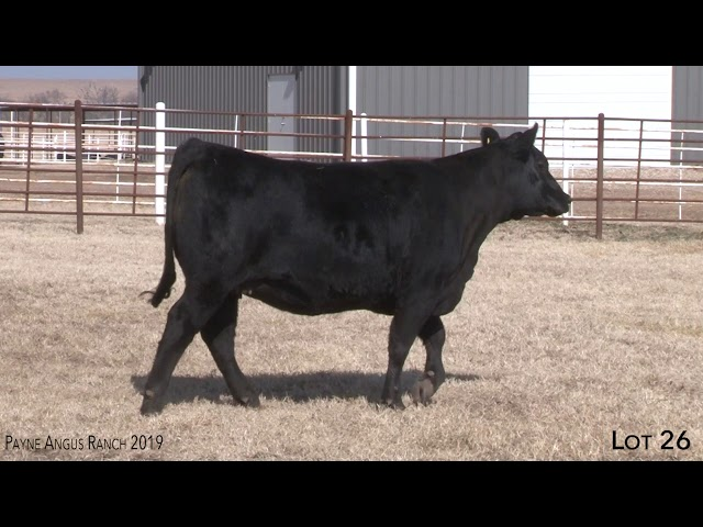 Payne Angus Ranch Lot 26