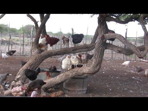 Jaco Burger's farm and bird sanctuary