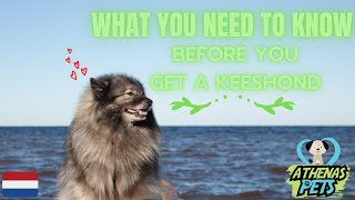Getting To Know Your Dog's Breed: Keeshond Edition