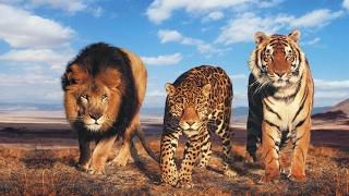 ЖИВОТНЫЕ МАНЬЯКИ . СЕРИЙНЫЕ УБИЙЦЫ . ТОП 10(ЖИВОТНЫЕ МАНЬЯКИ . СЕРИЙНЫЕ УБИЙЦЫ . ТОП 10 Человек считается самым опасным существом на земле. Эта истина..., 2015-10-16T07:24:48.000Z)