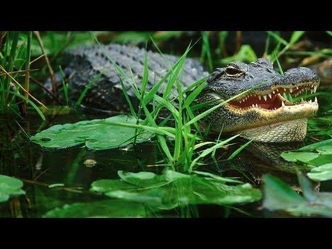 Everglades National Park - gode tips fra FDM travels USA-specialister