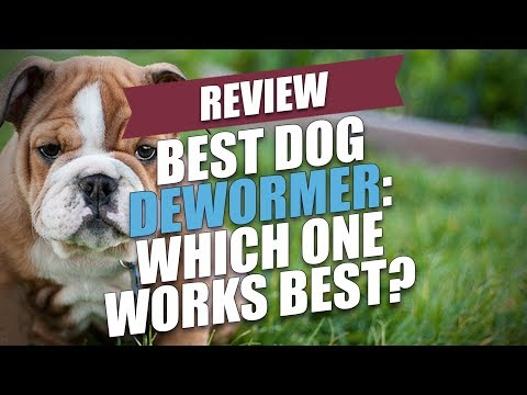 Best Dog Dewormer Review: Which One Works Best? - YouTube