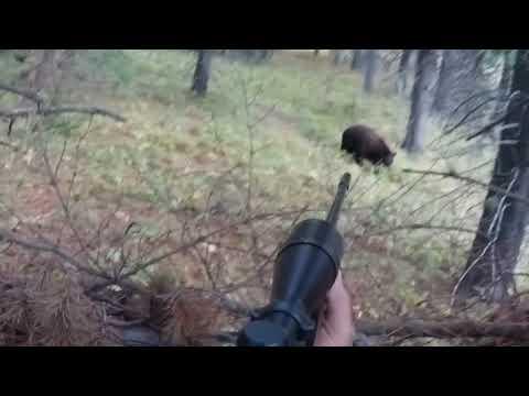 Bear Charge