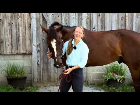 8 Different Horse Stretches