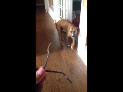 This Guilty Dog Is Really Bad At Lying
