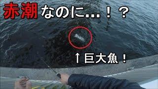 【芝浦南ふ頭公園】赤潮発生中に魚が入れ食い!?そして今年初釣りのあの魚が…!【2019.05.17】