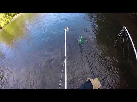 Au Sable River trout electrofishing