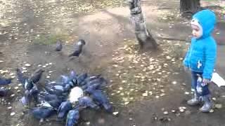 Малый кормит птиц (прикол в конце)