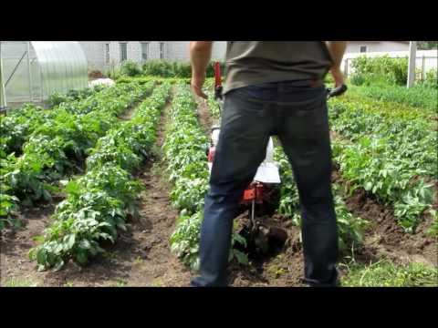 Окучивание картошки;Мотоблок weima 1050(клон фаворита