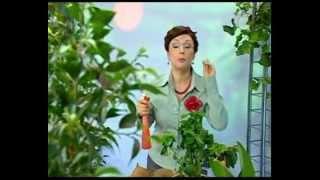 Биология 25. Кокосовая пальма. Джейран — Академия занимательных наук