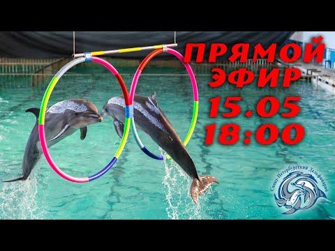 Молодое поколение дельфинов в Санкт-Петербургском Дельфинарии.
