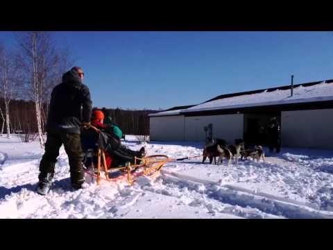 Dog Sledding in Milton, Vermont