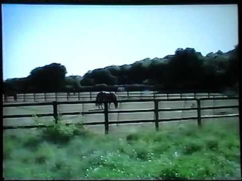 Wayne Lawton Cashello Music Video (Give A Little Love) filmed in southampton uk