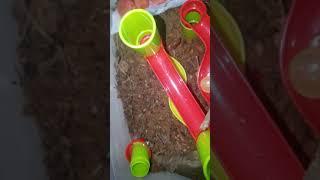 개미집에 장난감으로 인테리어 하고 수박 넣어주고 ㅎ