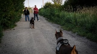 Zeus! The Red Doberman @ Flooded Out Cinema Leash Free Dog Park (part 1 Of 2)