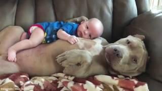 To jest miłość między psem a dzieckiem