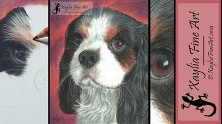 Tutorial: how to draw a Cavalier King Charles Spaniel in coloured pencils