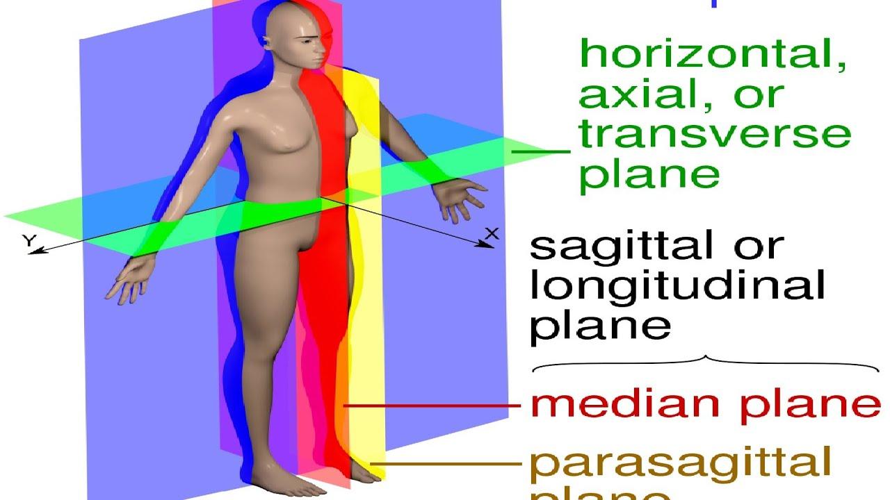hight resolution of anatomy of abdomen