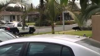 West Covina Police shoots dog with bean bag