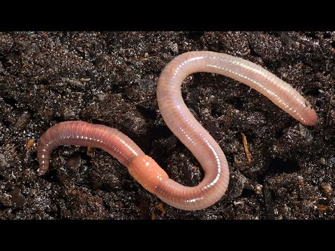 this-is-what-happens-when-you-put-earthworm-in-your-garden-soil