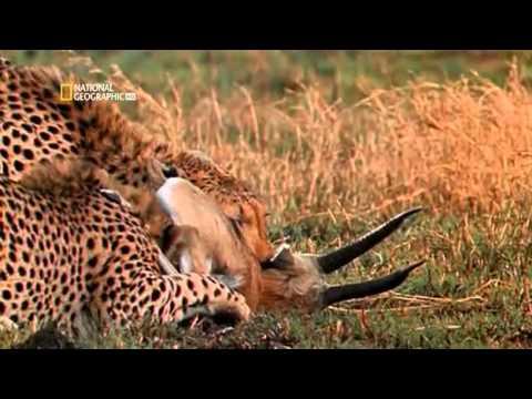 Worlds Deadliest Animal Planet on Earth