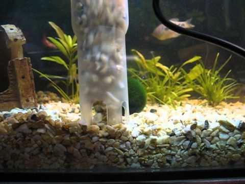 Самодельный пылесос для аквариума.