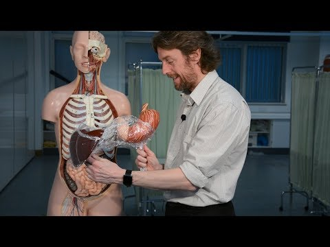 Liver (anatomy) - love your liver