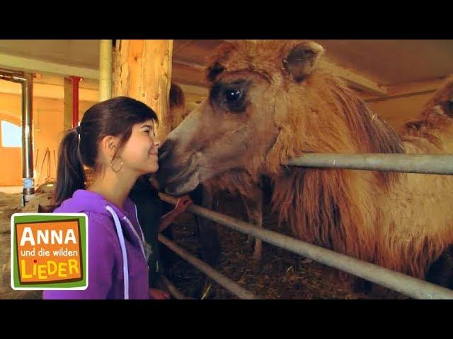 Dromedar Kinderlied Mit Tieren Anna Und Die Wilden Lieder Youtube