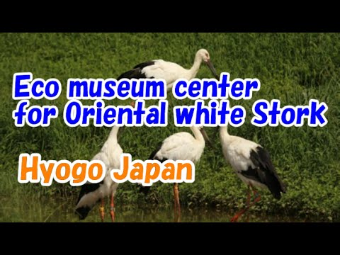 Japan Travel:  Eco Museum Center for Oriental White Stork, Toyooka City, Hyogo Prefecture Hyogo010