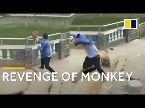 Monkey takes revenge after being pushed into pond