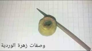 قبول ناجح 100/100 غير بالكحل