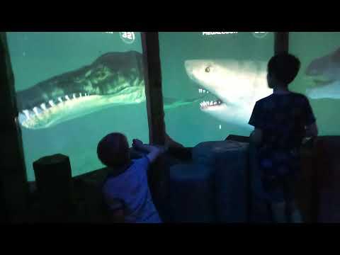 Ancient Oceans Exhibit at Sea Life Melbourne