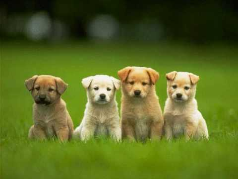 Cute Dogs Slideshow