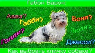 Как выбрать кличку для собаки? / Габон Барон