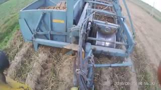 Kopanie ziemniaków 2016