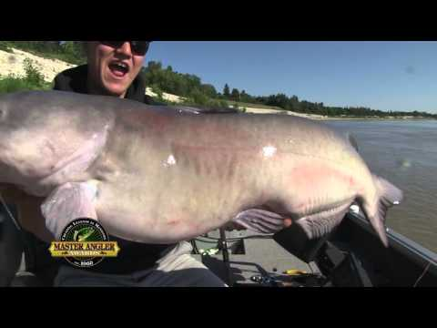 Giant Channel Catfish Fishing in Manitoba - Manitoba Master Angler Minute