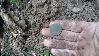 Утренняя прогулка! Поиск монет  по краю поля!
