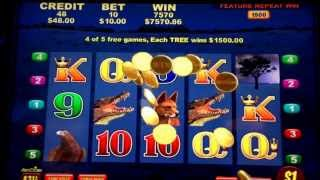 Big Red Pokie Feature 5 Hogs Big Win