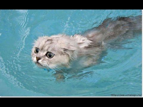 Смешные коты в воде) (Funny Cats in Water Compilation)