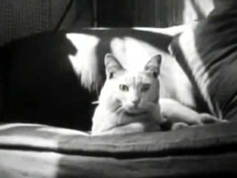 The Private Life of a Cat (Alexander Hammid & Maya Deren, 1944)