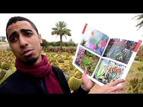 Un Jardin MAGNIFIQUE! (Cactus Thiemann, Marrakech 2017)